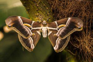 Benalmadena Parque de mariposa